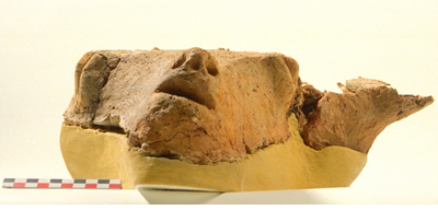 Bucranium coated with raw clay, Late Neolithic I (c. 4900 BC).